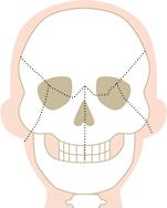 頭蓋骨写真